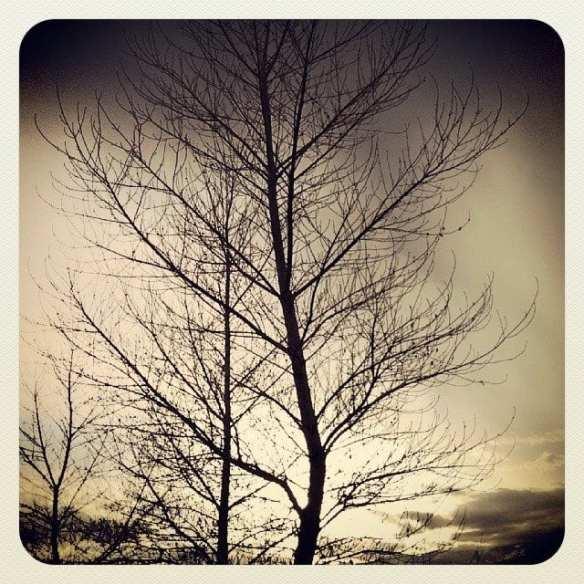 Tree Sunset 2.22.14