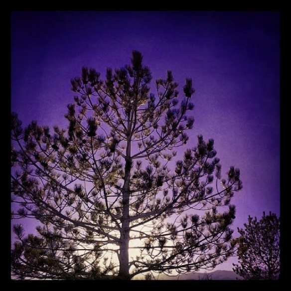 Trees Sunset 2.25.14