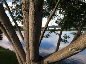 Tree Cut Down Vintage Lake 2017 #1