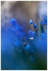 Två blå