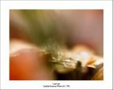 Leaf Vein
