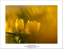 2015_03_15_0066173-Spring-yellow