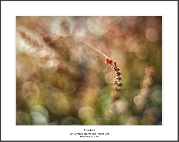 Camilla Noresson Photo Art / PN