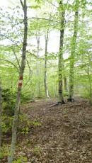 Sentier dans le parc de l'Aspromonte