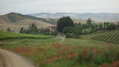 Paysage toscan entre Gambassi Terme et San Miniato