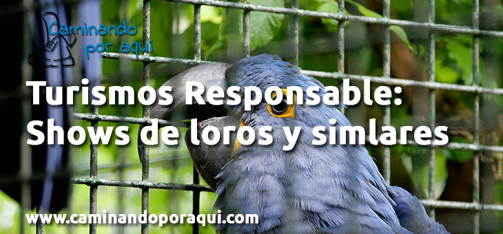 Turismo responsable: Shows de loros y similares