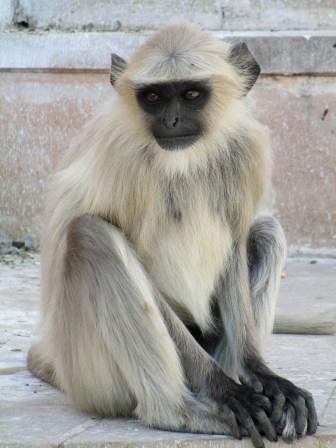 Pushkar (21)