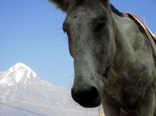 Annapurnas (214)