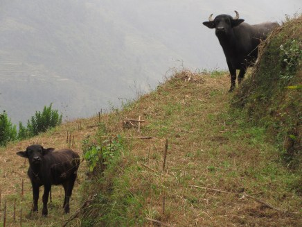 Annapurnas (233)
