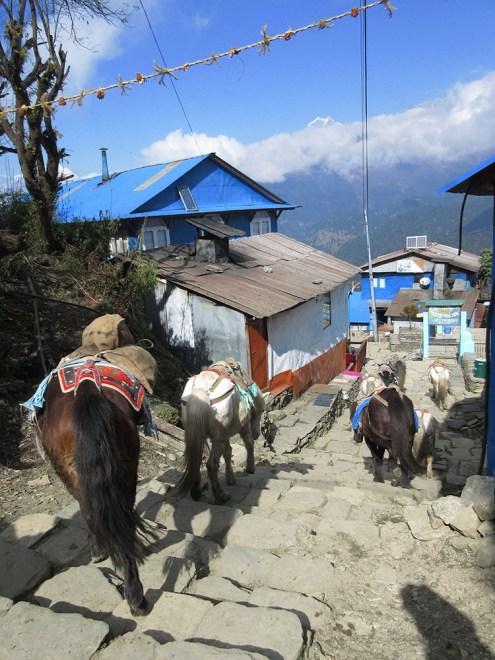 Annapurnas (72)