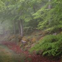 El hayedo de Peña Roya, el bosque encantado del Moncayo