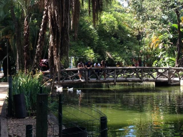 lago dos marrecos com marrecos foto ana paula gonzaga