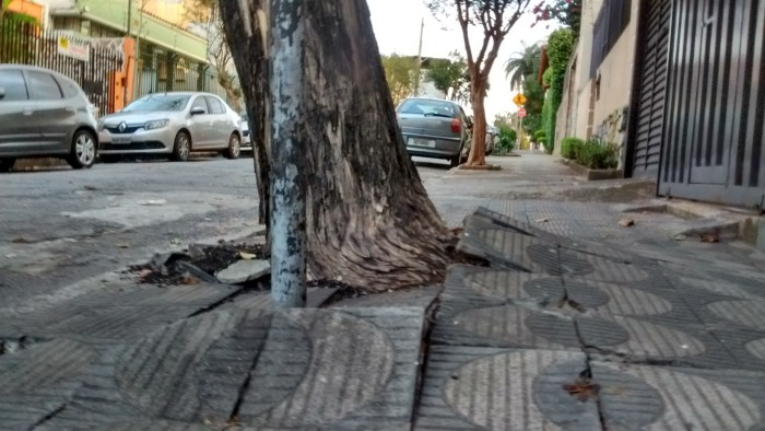 calçada com rachadura arvore