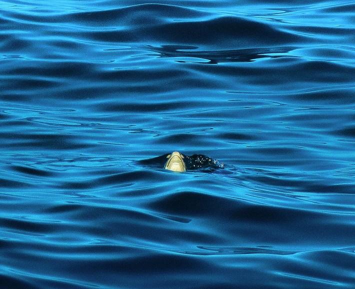 Tartaruga do mar, num ângulo inusitado