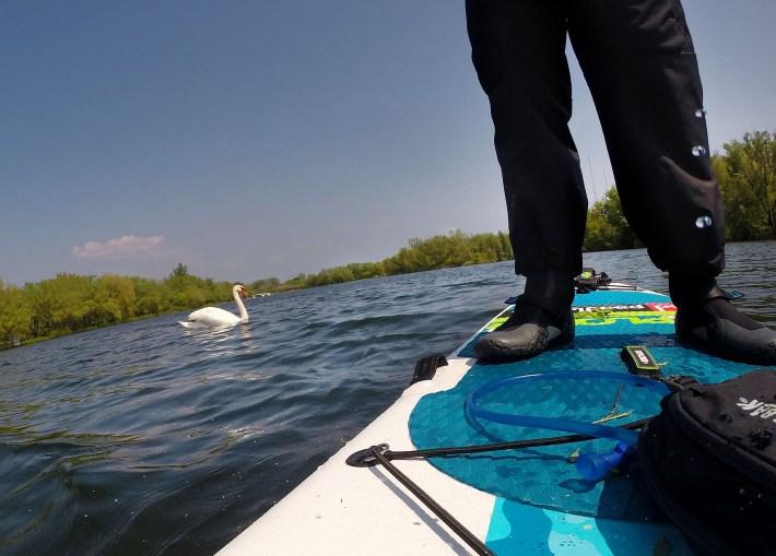 Tinha um cisne no caminho