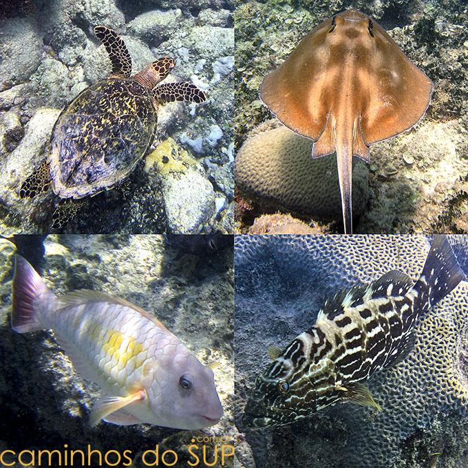 fauna-abrolhos-sup