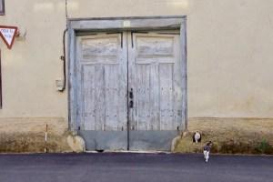 スエ白、猫右にドア