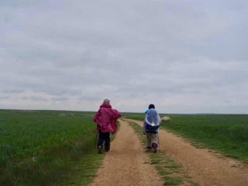 507メセタの大地、曇り空、左右に麦畑