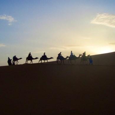 モロッコ、他の旅 砂漠ラクダ Morocco another travels