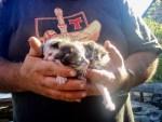 523マンハリン カミーノ 子猫 ハグリット 猫3匹