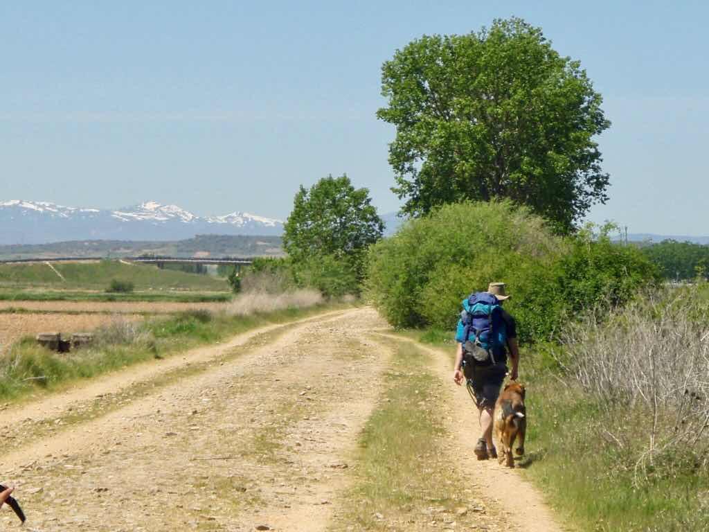 519 カミーノ オルビゴ 線路沿い 犬と巡礼者