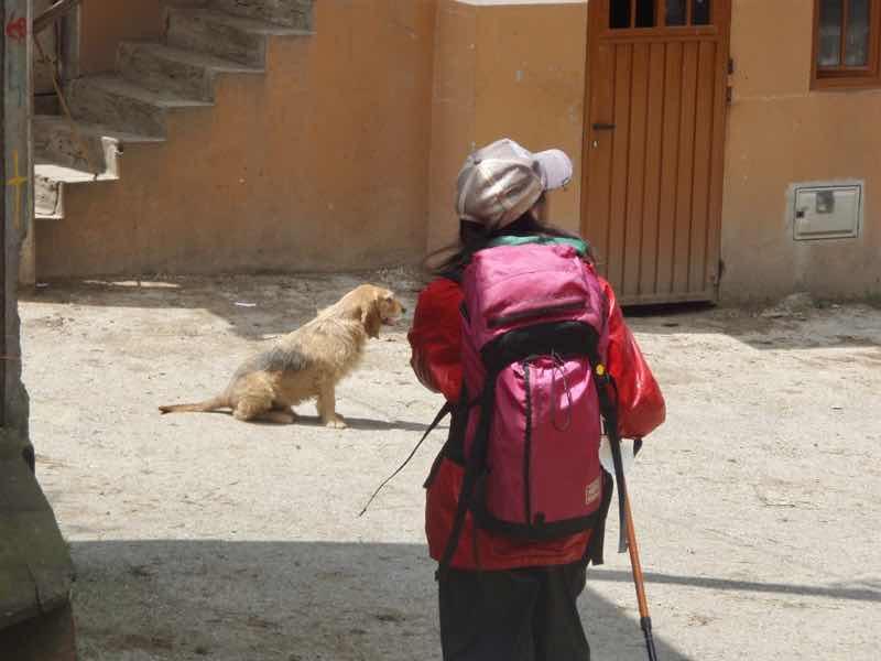 528 カミーノ トリカステーリャ 田舎道 1と犬