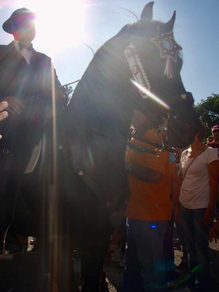 地中海 スペイン メノルカ島 馬祭り