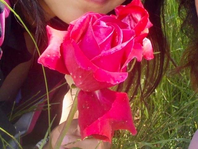 531Camino redrose バルバデロ 真紅のバラアップ