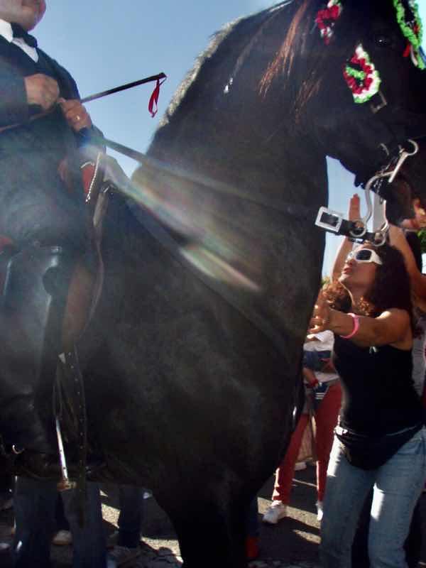 623メノルカ島 サン•フアン 馬祭り Menorca 馬 胸触る