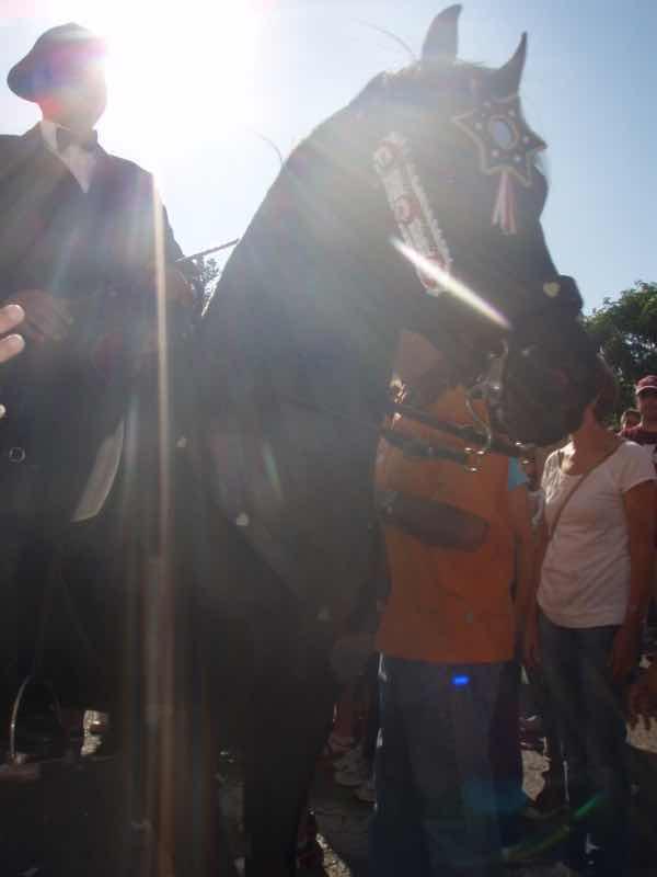 623メノルカ島 サン•フアン 馬祭り Menorca 馬騎手 採光