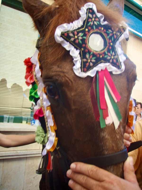 623メノルカ島 サン•フアン 馬祭り Menorca 茶馬首