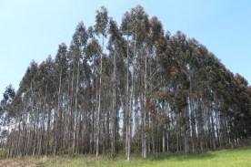 Rego dos Outeiros (before Bruma)