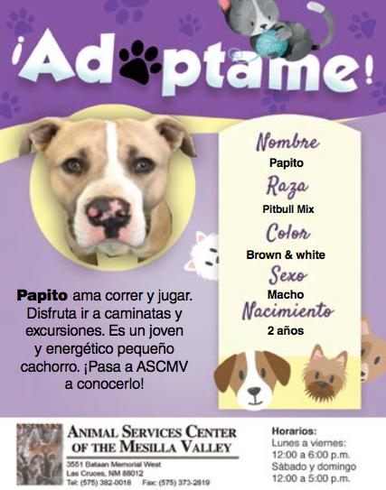 Adopta a Papito