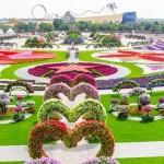 dubai-miracle-garden-jardin-de-flores-en-dubai