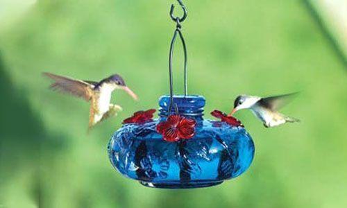 Comederos para colibríes y pájaros