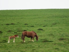 Baby horse!