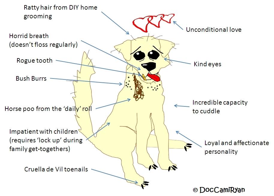 dog | Cami Ryan