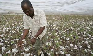 Source: http://www.theguardian.com/commentisfree/cif-green/2010/apr/21/gm-crops-benefit-farmers