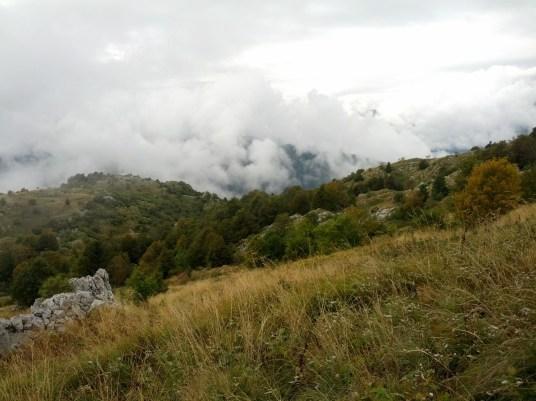 Nubi dal bosco dopo la pioggia