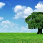 Noi siamo come gli alberi