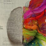 """PAS… il cervello emotivo delle """"persone altamente sensibili"""""""