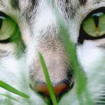 I Gatti ….trasformatori di energie e grandi guaritori