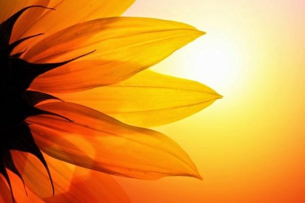 meditazione per la proiezione e protezione dal cuore 2