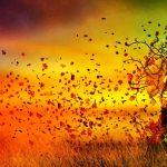 NOVEMBRE 2015 :LE AFFERMAZIONI POSITIVE
