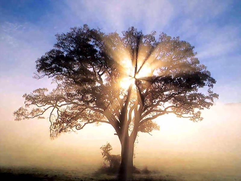 albero di luce1
