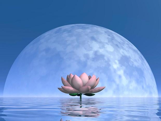 lotus_moon