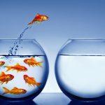SONO DENTRO IL CAMBIAMENTO DI QUESTO MOMENTO EPOCALE…(l'esperienza  di una lettrice )