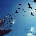 Divenire LIBERI dall'influenza degli altri e degli eventi è una NOSTRA scelta… di Noemi Fiorentino