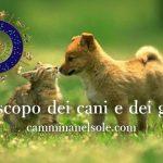 CANI E GATTI -SEGNI ZODIACALI ED OROSCOPO