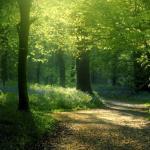 PERCHE' SIAMO SPESSO ARRABBIATI ? (La fonte della saggezza degli alberi)